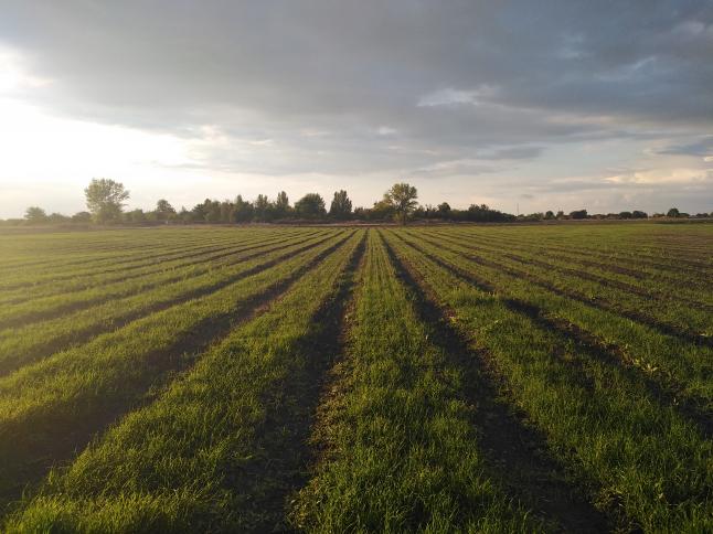 Фото - Сельхозпроизволство