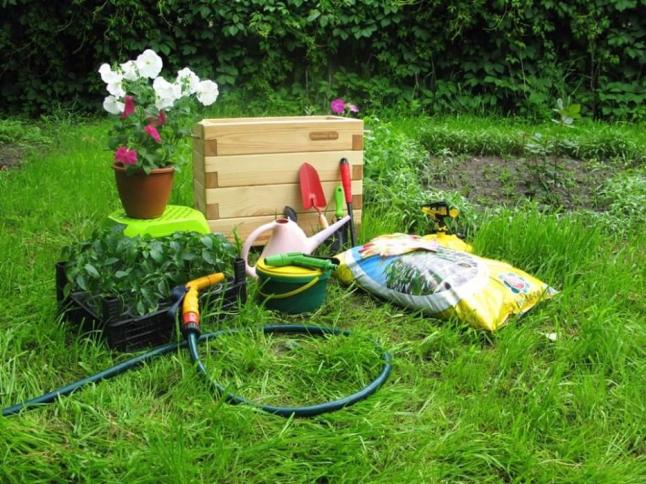 Фото - Выращивание овощей кустарника продажа