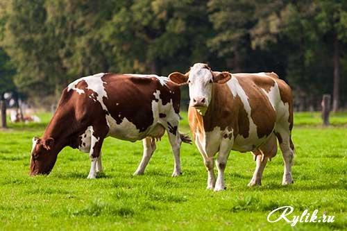 Фото - Создать торговую маркетинговую сеть товаров для животн.