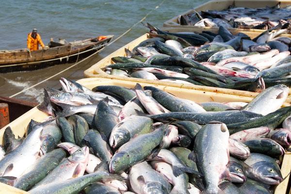 Фото - Промышленный вылов морепродуктов