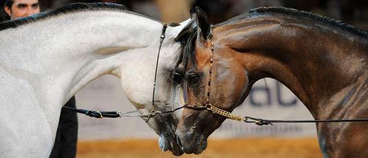 Фото - тотализатор выигрыша лошадей на скачках