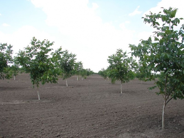 Фото - Агрофирма, выращивание и переработка грецкого ореха.