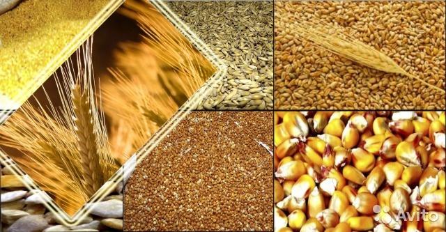 Фото - Торговля зерновыми на внутреннем рынке