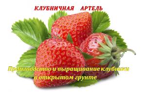 Фото - КЛУБНИЧНАЯ  АРТЕЛЬ