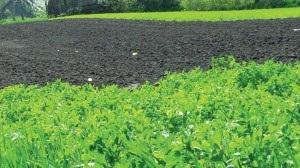 Органическая ферма