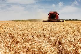 Фото - Покупка корпоративных прав сельхозпредприятий Украины