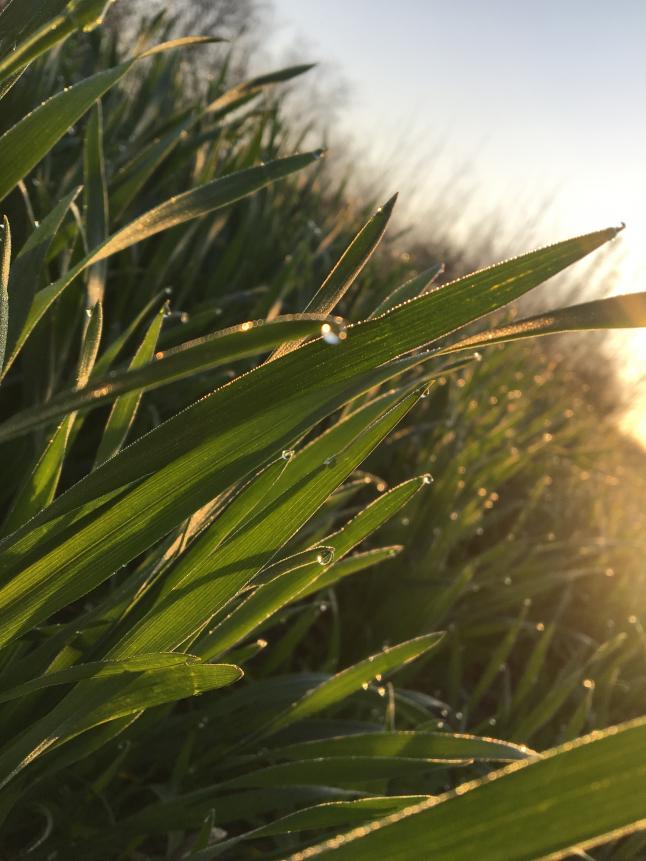 Фото - Создание крупного фермерского хозяйства