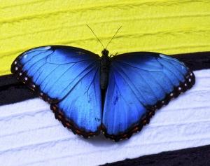 Фото - Живые бабочки