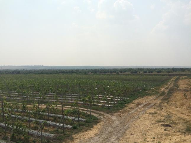 Фото - Выращивание и продажа ягод