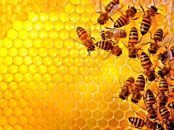 Фото - Украинская пчела