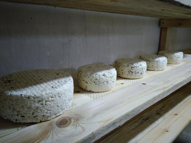 Фото - Производство натуральных сыров ручной работы.