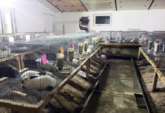 Фото - Продаж кролячого мяса